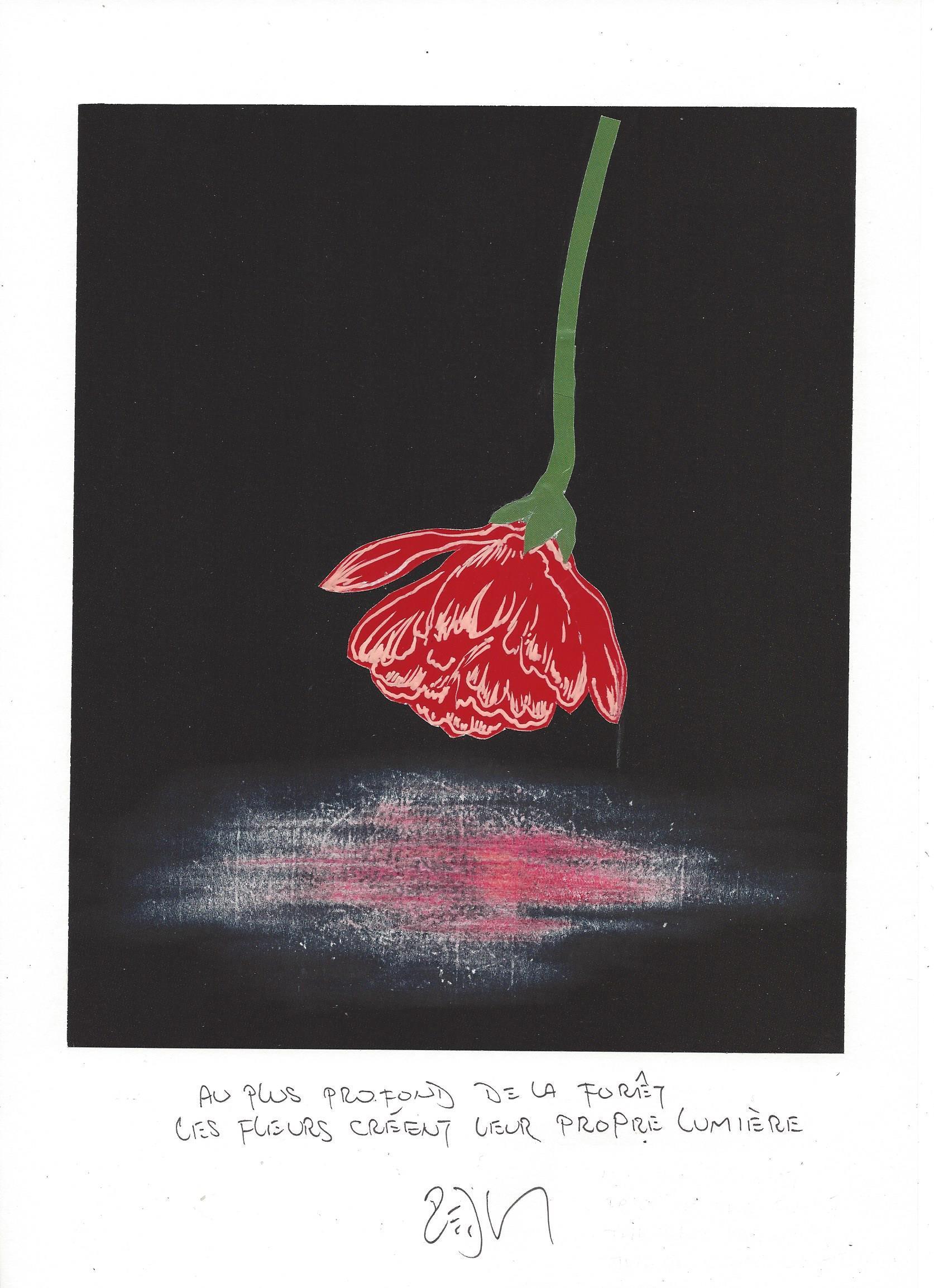 « In the deepest part of the forest the flowers make their own light – Au plus profond de la forêt les fleurs créent leur propre lumière »